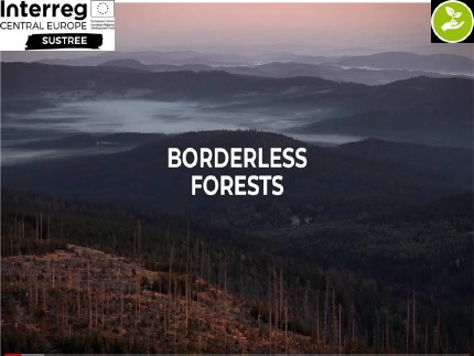 Borderless Forests